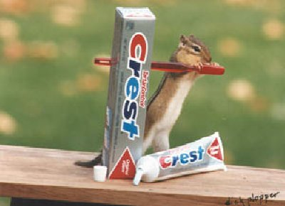 chipmunk tooth brush
