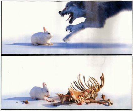 rabbit eats wolf