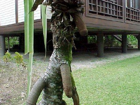 willies on tree